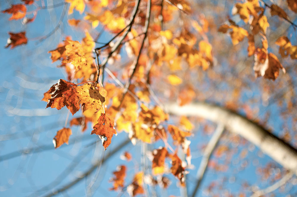 fall_leaves2